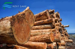 Frost Lake Logging Trees cut and gathered waiting for the next stage of production or export