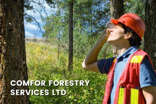 A forest license worker comfor