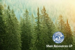 Shas Resources Forest View
