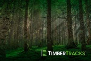 Timber Tracks Mossy Forest View